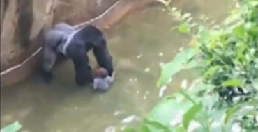 Kopshti zoologjik u kundërpërgjigjet kritikëve pas vrasjes së gorillës