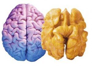 nut-brain-300x222
