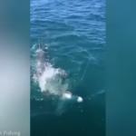 peshkaqen 1