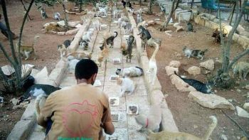cat-man-aleppo-syria-3_1489857589-9896676