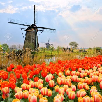 29086615-Classic-Dutch-windmills-with-orange-tulips-and-sunbeams-Netherlands-Stock-Photo