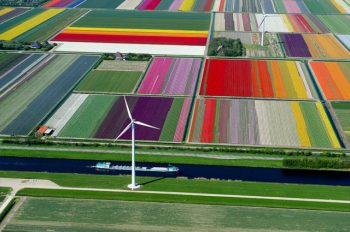 flower-fields-aerial-photography-netherlands-normann-szkop-53