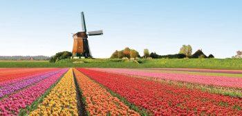 holanda-tulipanes