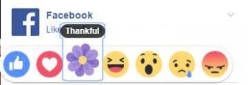 Ja çfarë domethënie ka kjo lule në Facebook